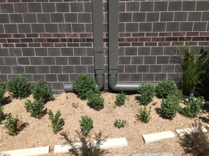 School Sustainability Plan - water infiltration